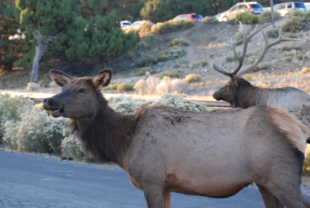 Happy 100th Birthday National Park Service