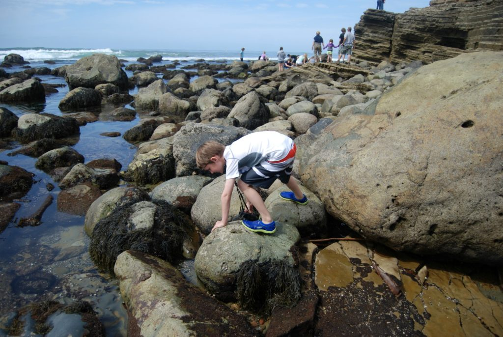 Exploring Point Loma Tide Pools