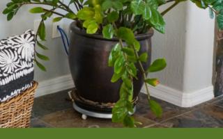 6 Easy Starter Houseplants