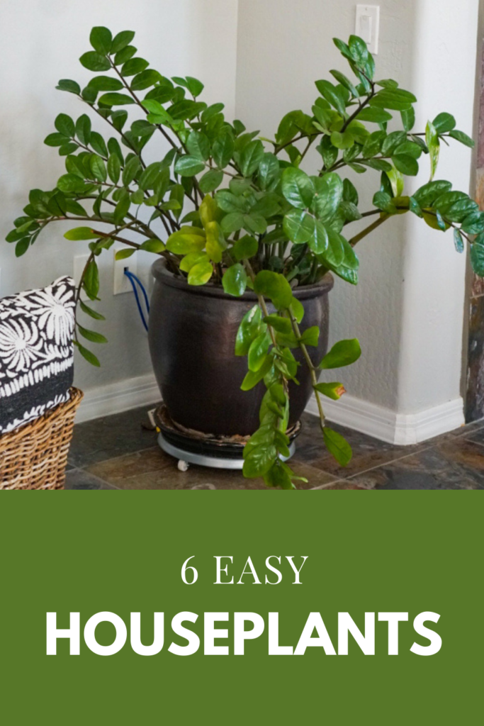 6 Easy Starter Houseplants