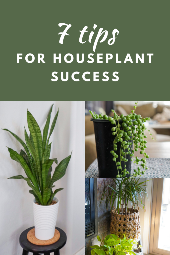 7 Tips for Houseplant Success