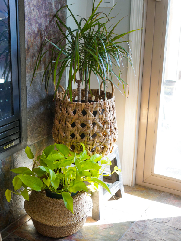 house plants tips for growing