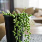 7 Houseplant Tips for Success