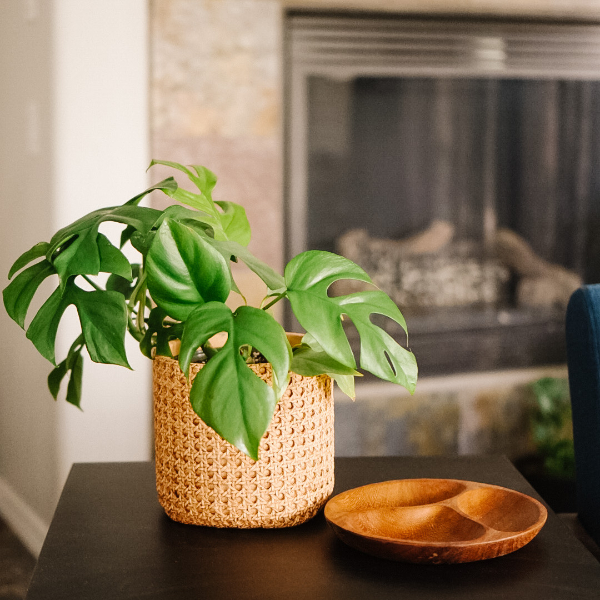 The Best Pots for House Plant Lovers