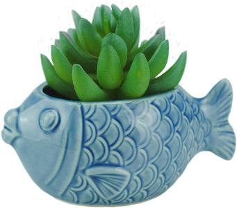 fish succulent pot