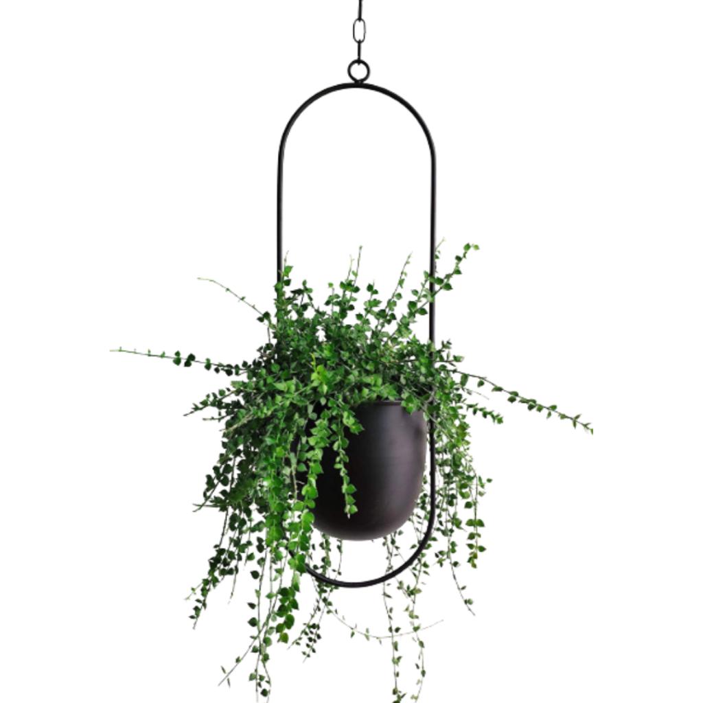 modern black hanging planter
