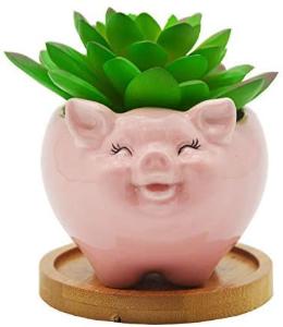 pink pig succulent pot