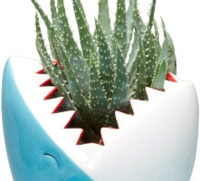 The Best Fun, Cute, Crazy Pots for Succulents