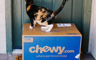 5 Reasons Why We Love Chewy for Pet Supplies + Favorites for Cats